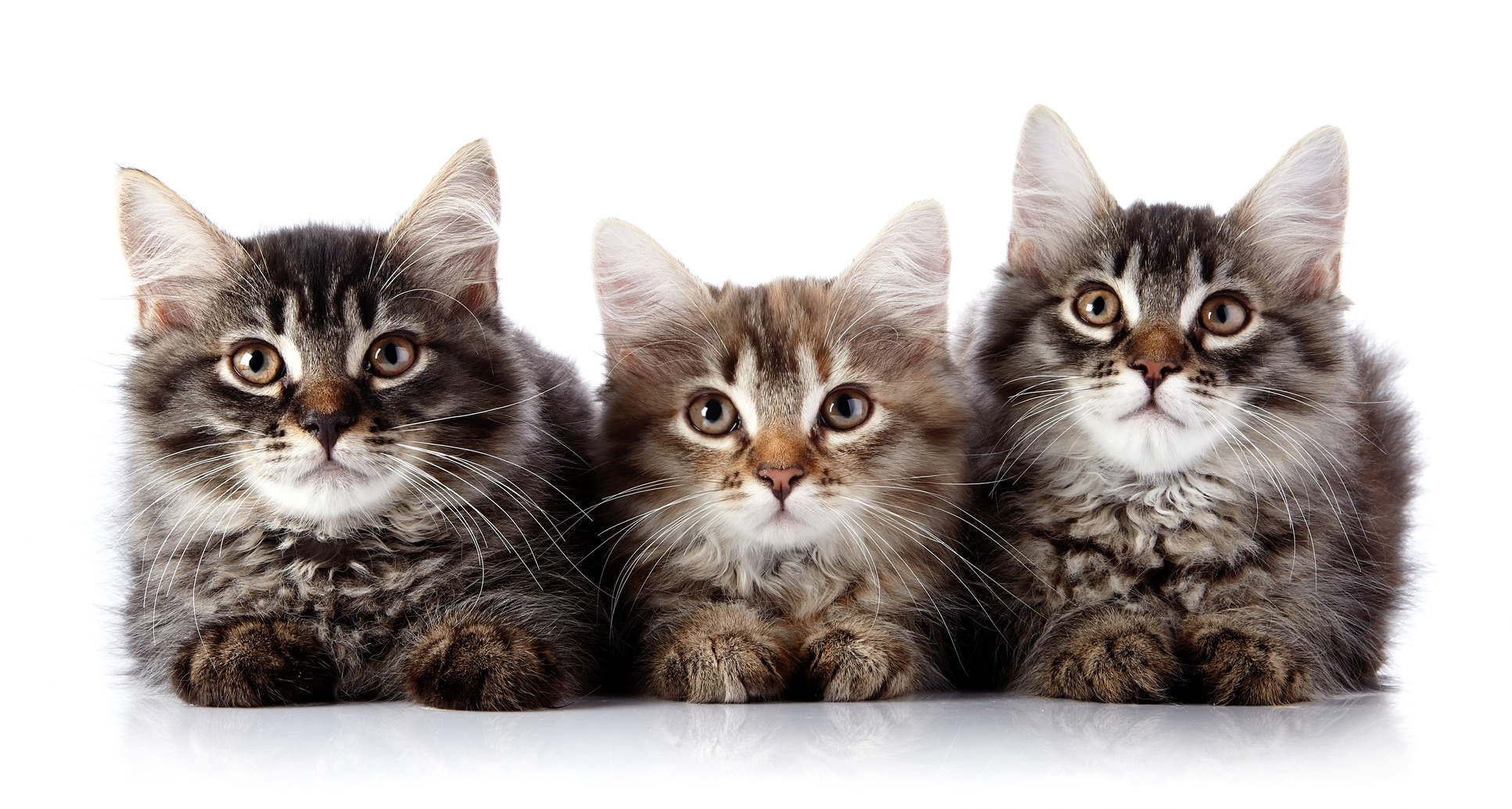 5507692-cat-m