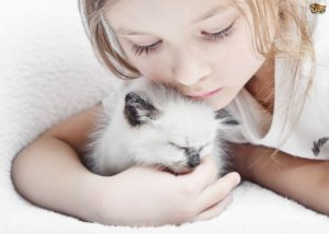 cats-and-children-when-to-introduce-them-53f72f009bbe8