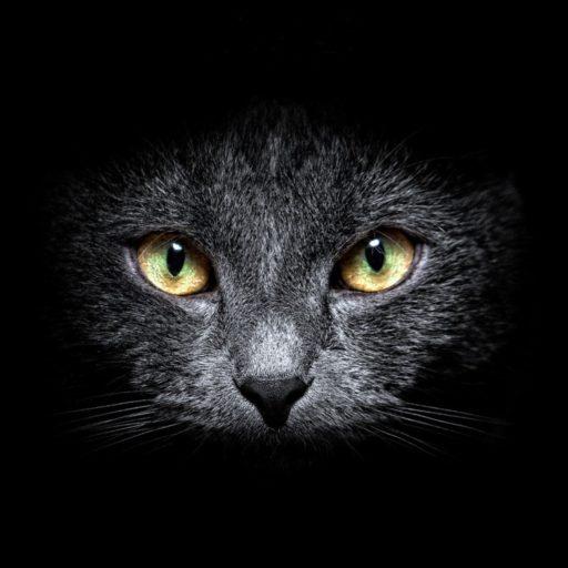 cropped-ws_Black_Cat_in_the_Dark_1366x768-1.jpg