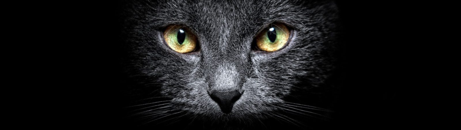 cropped-ws_Black_Cat_in_the_Dark_1366x768.jpg