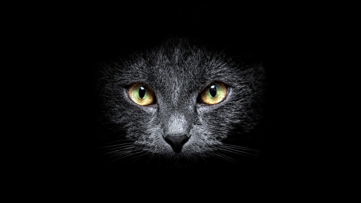 ws_black_cat_in_the_dark_1366x768
