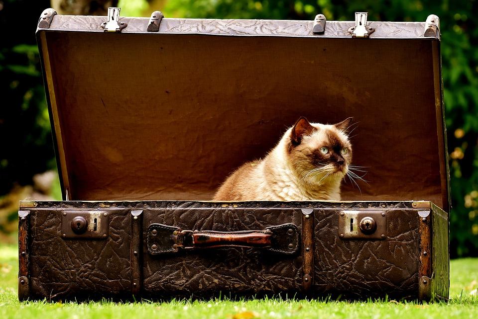 luggage-2442126_960_720